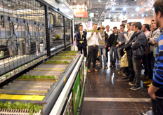 Couldn't walk through the paths in hall 3? Then the Autostix demo must be going on. Visser Horti Systems showed many visitors the innovative system.